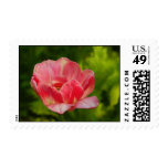 Tulip Watercolor Postage Stamp