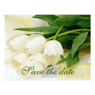 Tulip white flower postcard