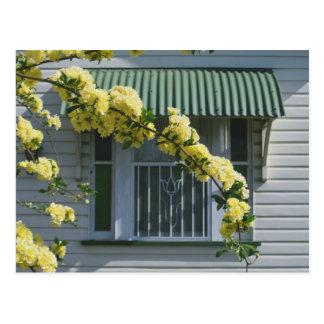 tulip window postcard