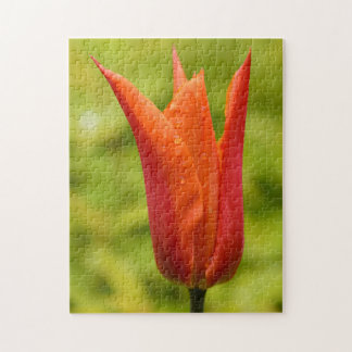 Tulip with water droplets 1 puzzle