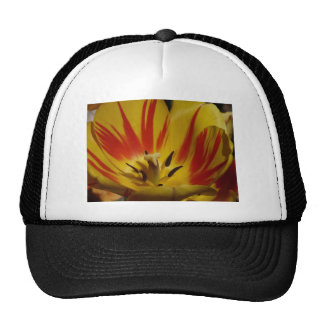 tulip,yellow and red trucker hat