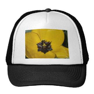 tulip, yellow trucker hat