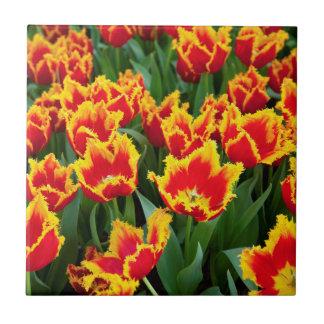 Tulipa Fabio, Keukenhof, Netherlands Ceramic Tile