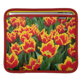 Tulipa Fabio, Keukenhof, Netherlands Sleeve For iPads