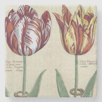 Tulipa Octaviani del pont, y Tulipa elegante, para Posavasos De Piedra