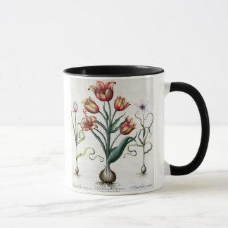 Tulipa Perfica non aperta, Tulipa Polyanthos Praco Mug