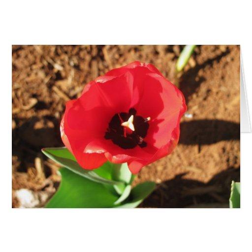 Tulipán #2 de la flor tarjeta de felicitación