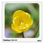 Tulipán amarillo bonito