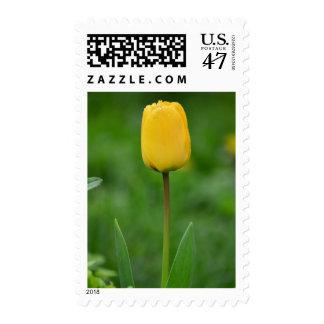 Tulipán amarillo con los sellos de las gotas de