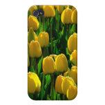 Tulipán amarillo iPhone 4 fundas