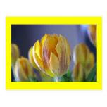 Tulipán amarillo postal