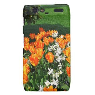 Tulipán anaranjado en productos múltiples motorola droid RAZR carcasa