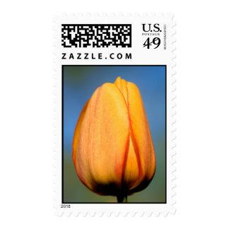 Tulipán anaranjado - sello