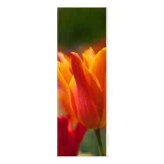 Tulipán anaranjado tarjetas de visita