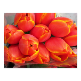 Tulipán anaranjado tarjetas postales