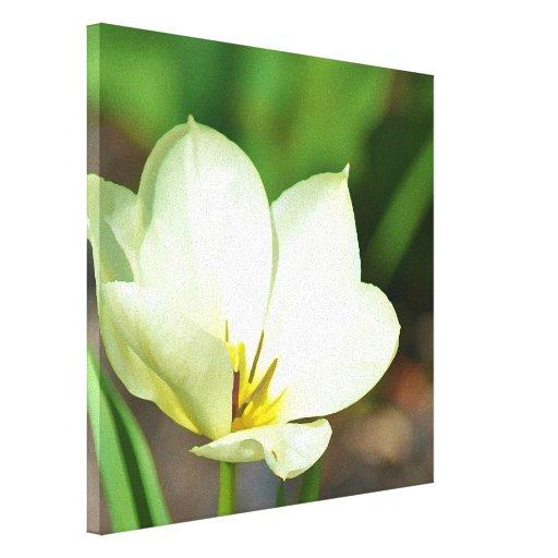 Tulipán blanco de la primavera impresión en lienzo estirada