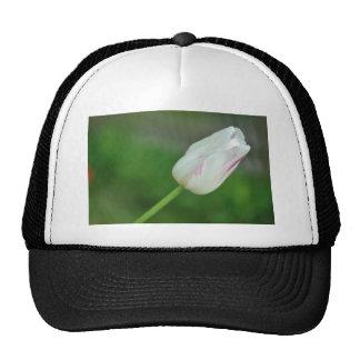 Tulipán blanco gorras de camionero