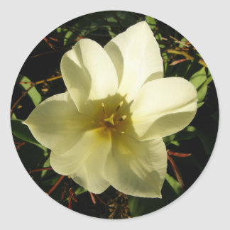 Tulipán blanco pegatina redonda