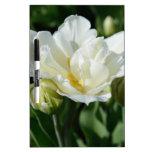 Tulipán blanco pizarras blancas