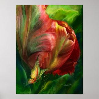 Tulipán-Colores del paraíso Poster