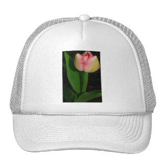 Tulipán de la flor de la primavera gorros bordados