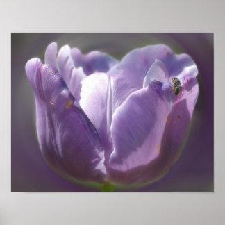 Tulipán de la lavanda con el poster de la flor de