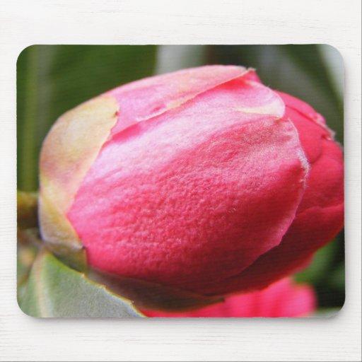 Tulipán de la macro de Highgate Mouse Pads