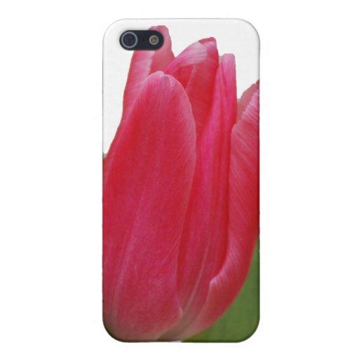 Tulipán de las rosas fuertes iPhone 5 funda
