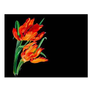 Tulipán del loro (paisaje del png) postales
