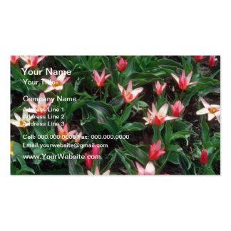 Tulipán del placer del corazón rojo, (Tulipa Kaufm Tarjetas De Negocios