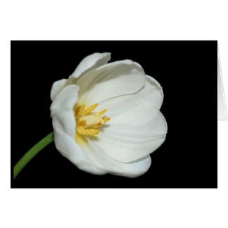 tulipán despierto tarjeta de felicitación