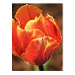 Tulipán en el fuego tarjeta postal