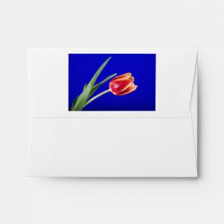 Tulipán en fondo azul sobre