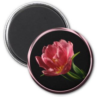 Tulipán en imán de la foto de la floración del dob