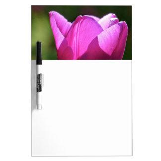 Tulipán en luz brillante tableros blancos