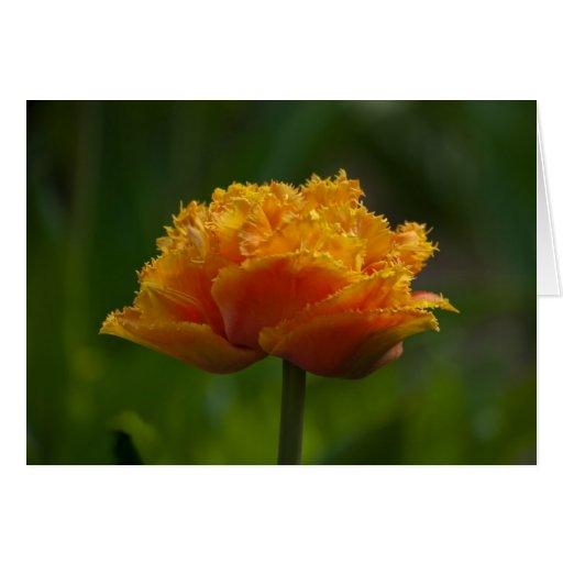 Tulipán en primavera tarjeta de felicitación