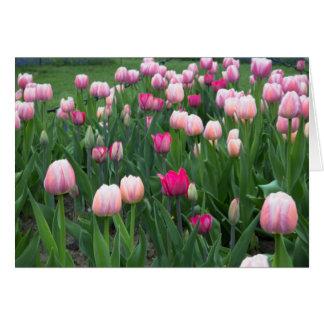 Tulipán Fesitval 2 Tarjeta De Felicitación
