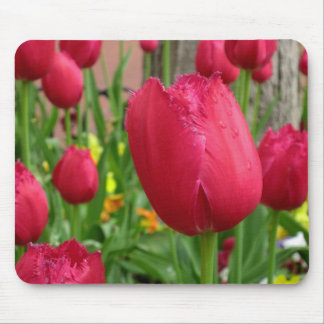 Tulipán franjado rosa alfombrillas de ratón