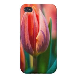 tulipán iPhone 4 cobertura