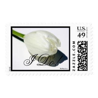¡Tulipán, hago! , Casando el sello
