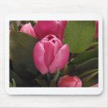 Tulipán hermoso tapete de ratón