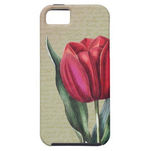 Tulipán inspirado de la belleza iPhone 5 protectores