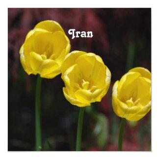 Tulipán iraní comunicado