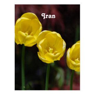 Tulipán iraní tarjetas postales