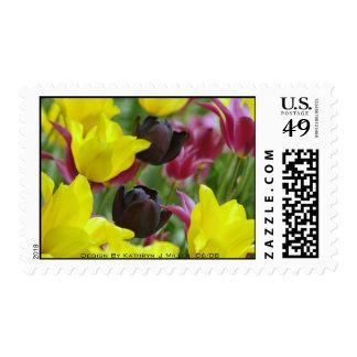 Tulipán negro sello