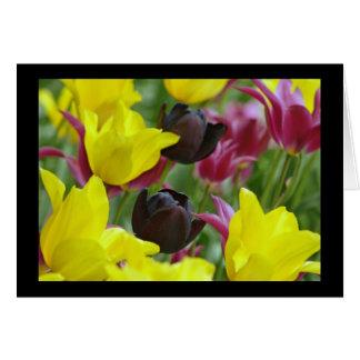 Tulipán negro tarjeton