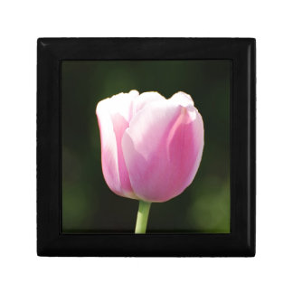 Tulipán perfectamente rosado caja de regalo