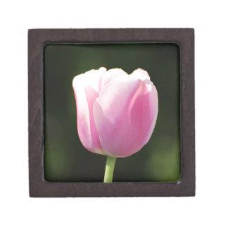 Tulipán perfectamente rosado cajas de regalo de calidad