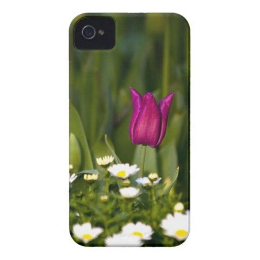 Tulipán púrpura con gotas de lluvia Case-Mate iPhone 4 carcasas