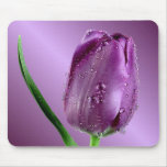 tulipán púrpura con las gotas de agua alfombrilla de raton